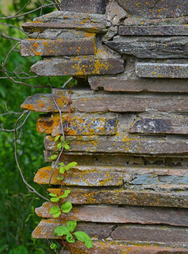 Lichen on chimney rock