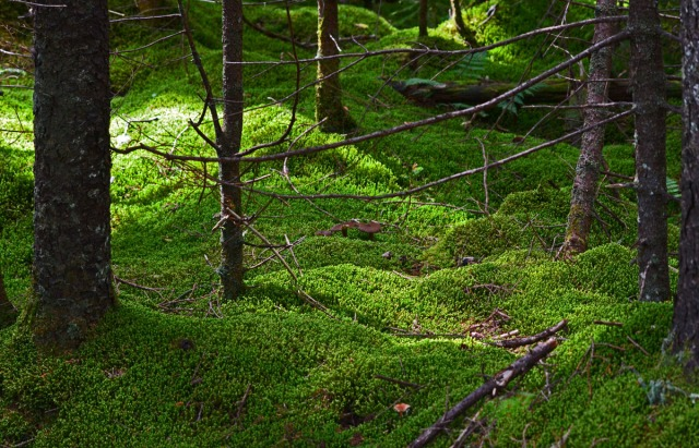 magic of light on moss