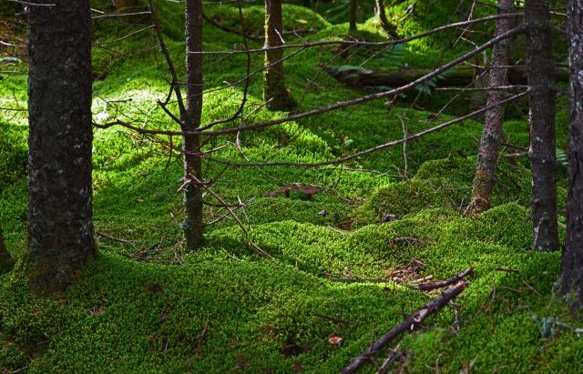 magic of light on moss