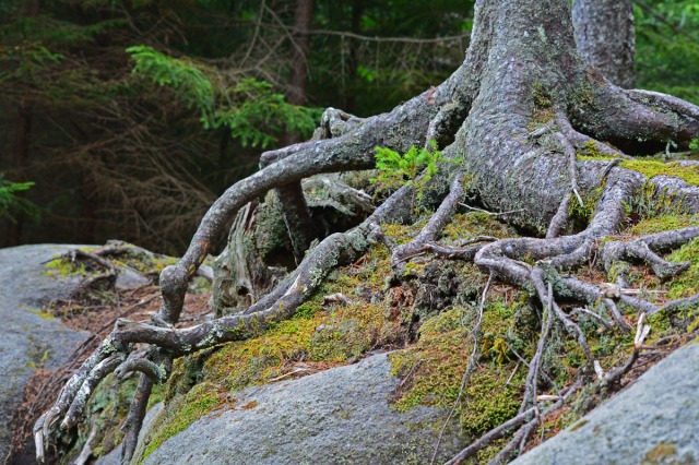 roots over rocks