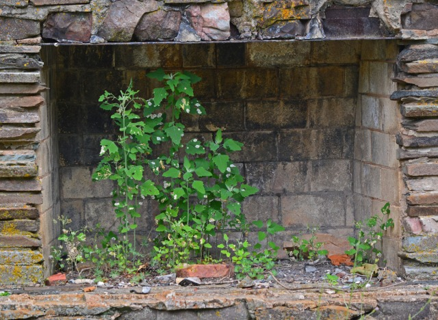 Weeds in the fireplace