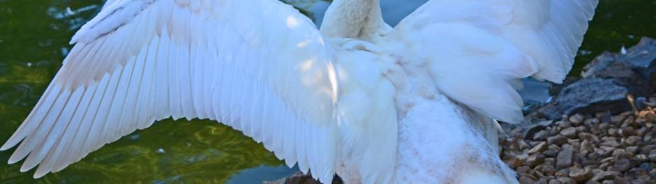 wingspread header