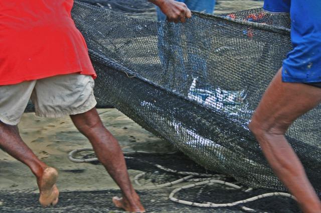 Fishermen bringing in the net