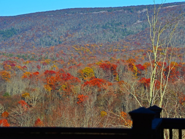 fall foliage from deck