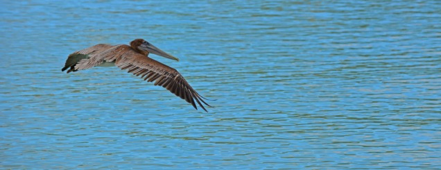 flying low over the water
