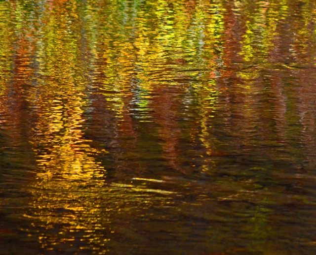golden river reflections