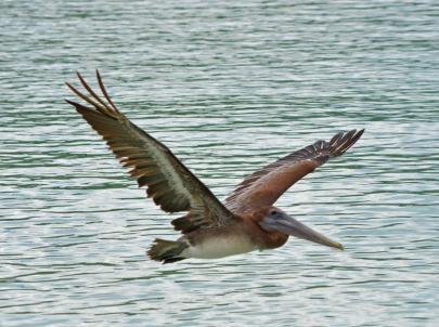 V-shaped wings
