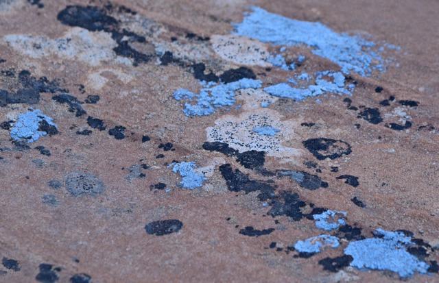 blue lichen