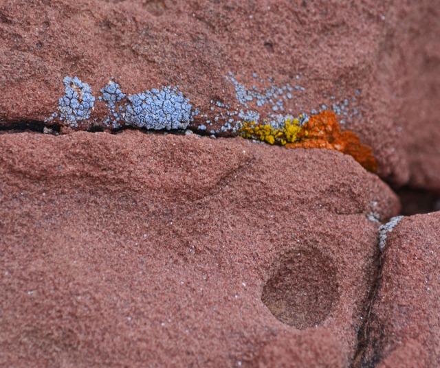 lichen in rock seams