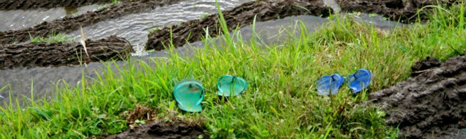 flipflops in ricefield