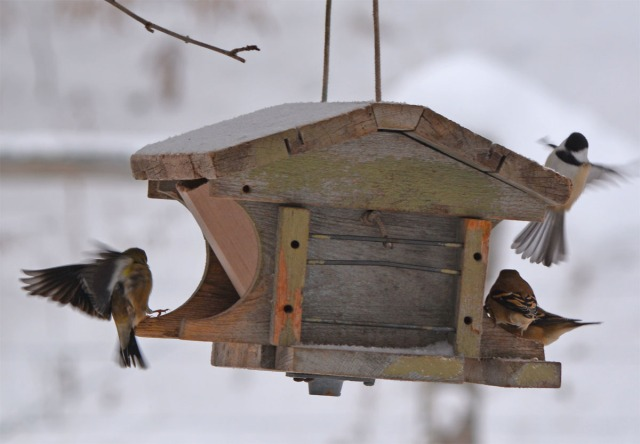 Birds at the feeder