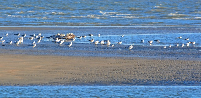 birds on sandbank