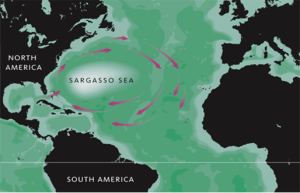 Sargasso Sea.  Source:  Wikipedia