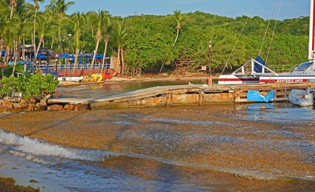 Seaweed at resort