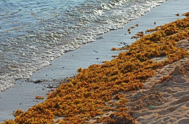 Seaweed at sunset