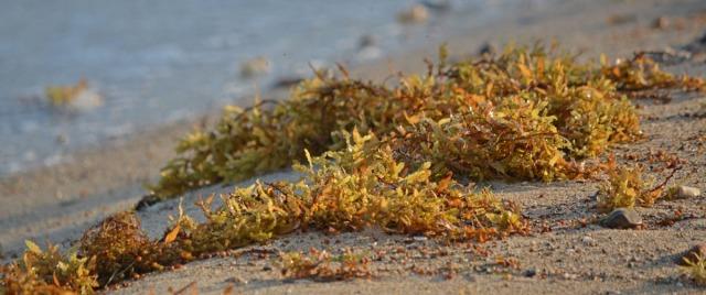 seaweed close-up