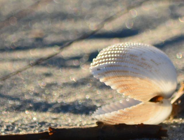 shell in evening light