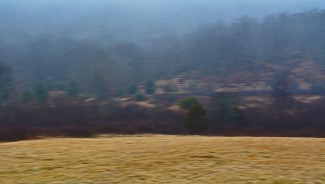 blurred landscape