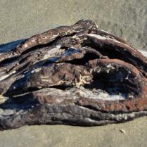 driftwood skull