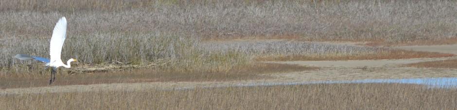 egret header