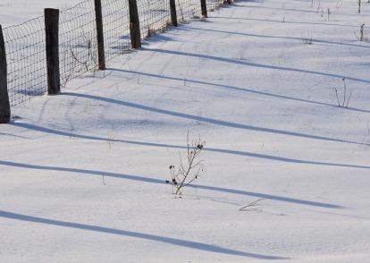 fence post shadows