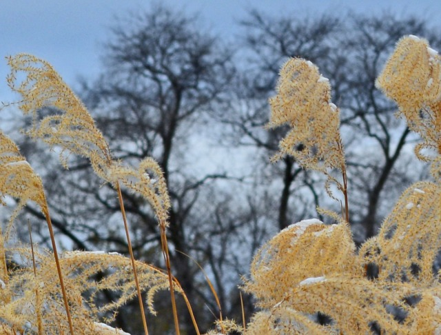 grasses and trees