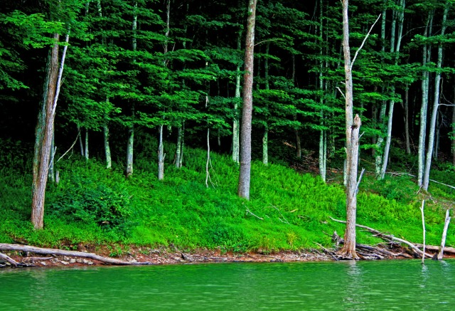 Green water, green woods