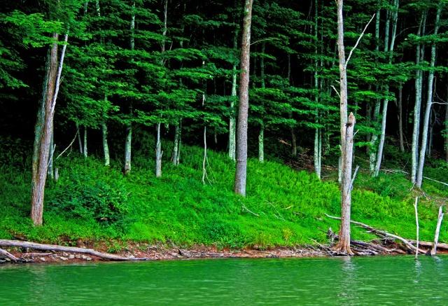 Green water, green woods