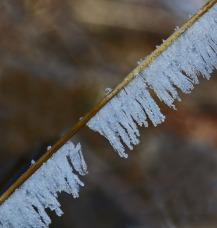 hoar frost on reed