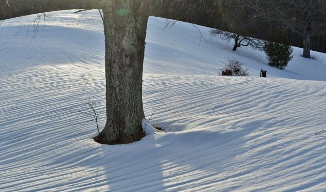 Snow pattern around tree