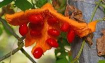 open fruit