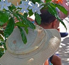 men under flowering jasmine