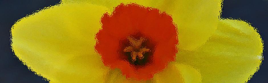 daffodil header