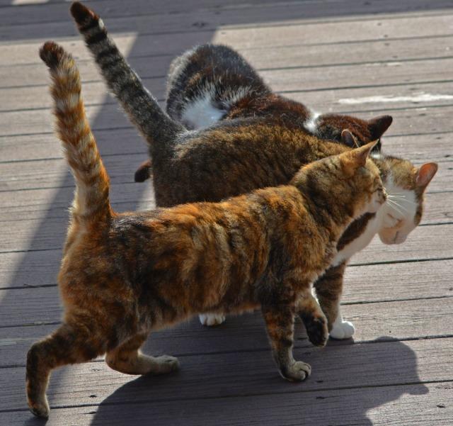 cat tangle