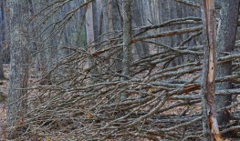 Fallen tree branches