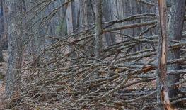 Fallen tree branches