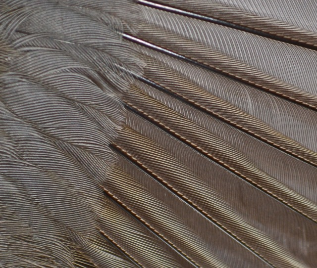 wingfeathers from above