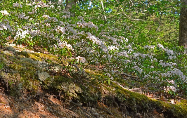 Small shrubs on rocky slope
