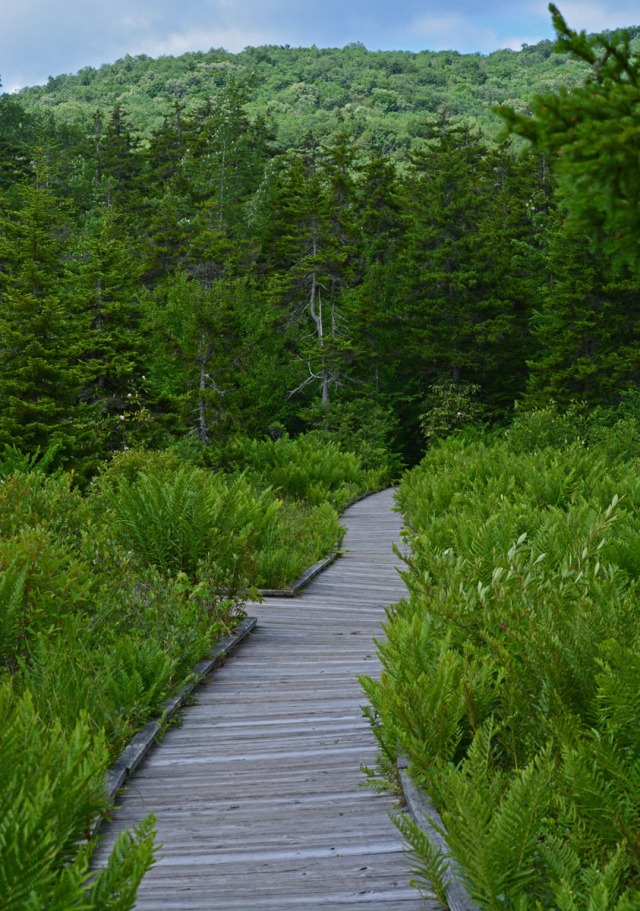 boardwalk in open area