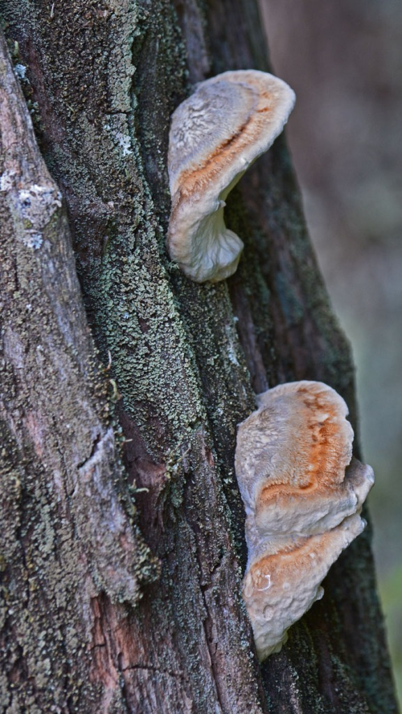 fungus on tree trunk