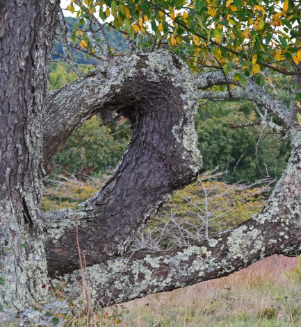 circular tree branch