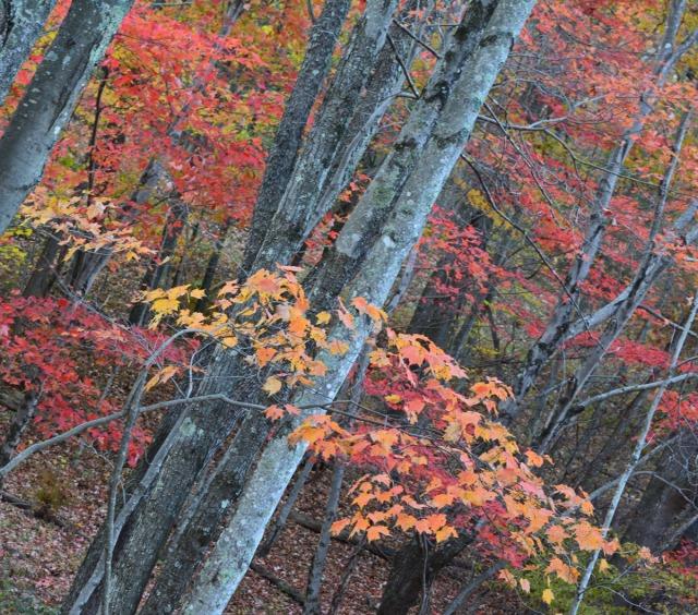 colorful woods diagonal
