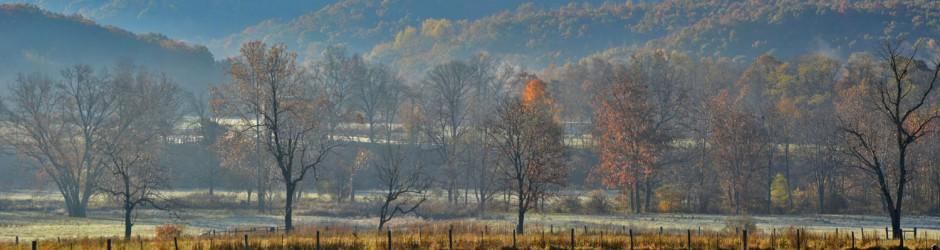 header trees in morning fog