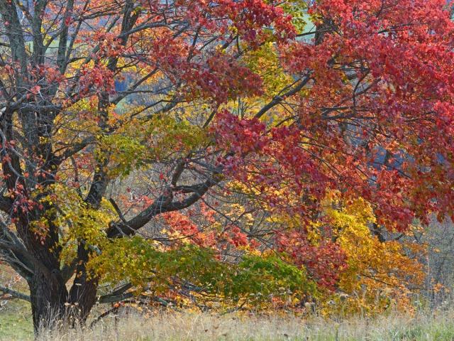 multi-colored tree