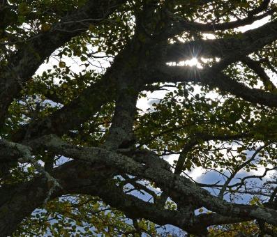 sun glinting through tree