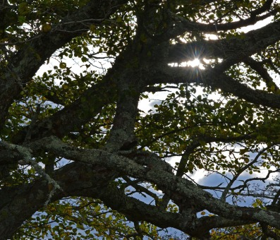 sun glinting through tree