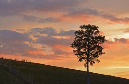 tree and fence at sunset