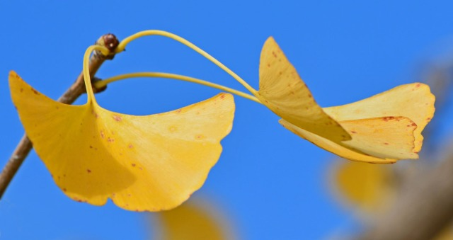 leaves against blue sky