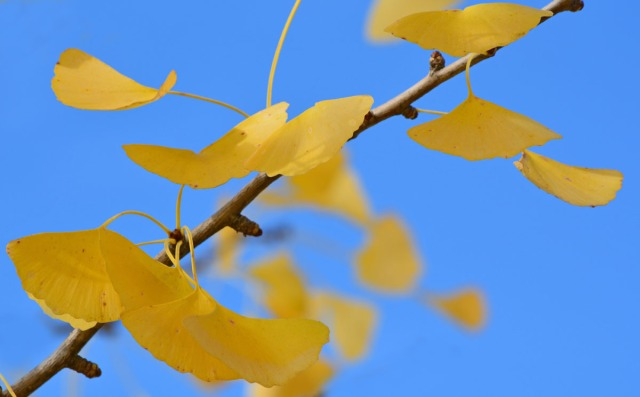 branch with leaves against blue sky
