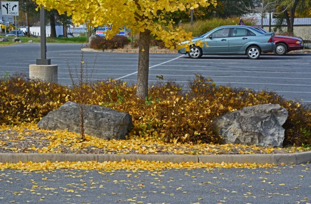 leaves and tree in parking lot